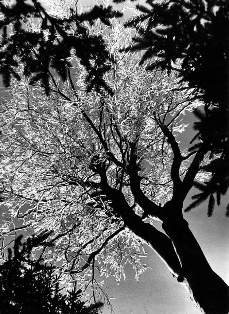 Eifert János: Fénytvirágzó fa (1968)