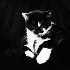 Macska fekete-fehérben (Oostende, Belgium, 1983. szeptember) Photo: Eifert János
