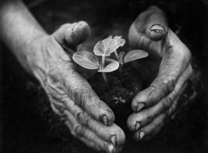 1978-Eifert_Kertész-keze