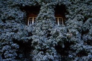 Eifert János: Két ablak (Neubrandenburg, NDK, 1982)