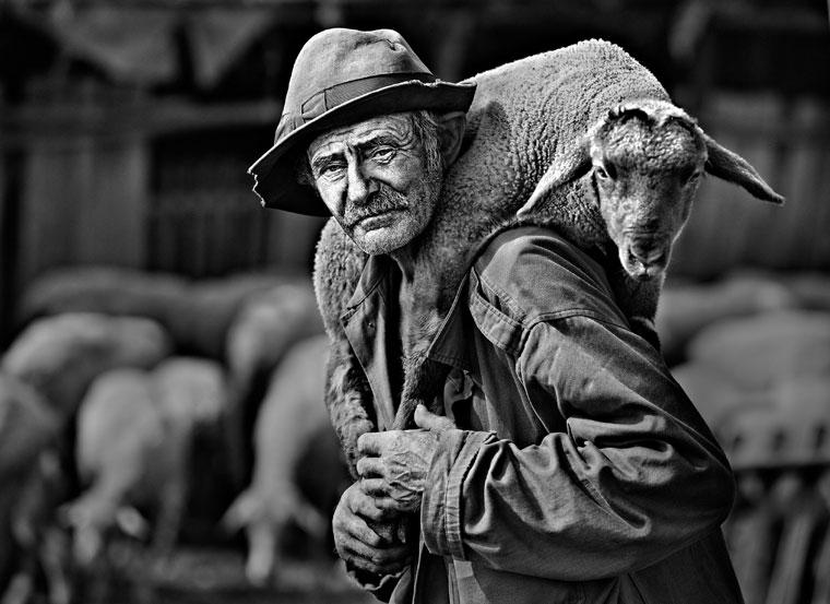 Papp Elek: Beteg bárány