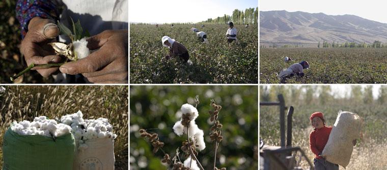 China-Cotton-Plant