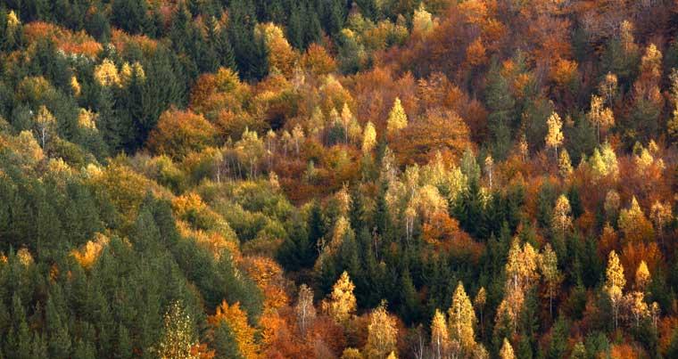 Bulgaria-Koptivstica-Autumn-Photo-Eifert