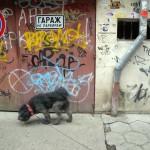 Szófia-belváros-08