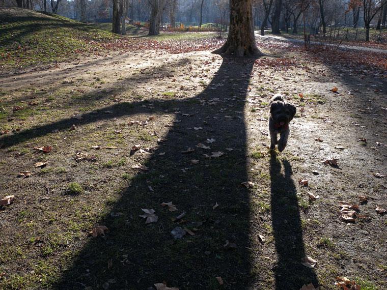 Városliget-fa-árnyéka-kutyá