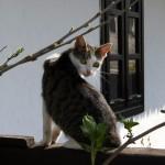 Hollókő-macska
