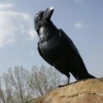Hollókő-szobor-madár