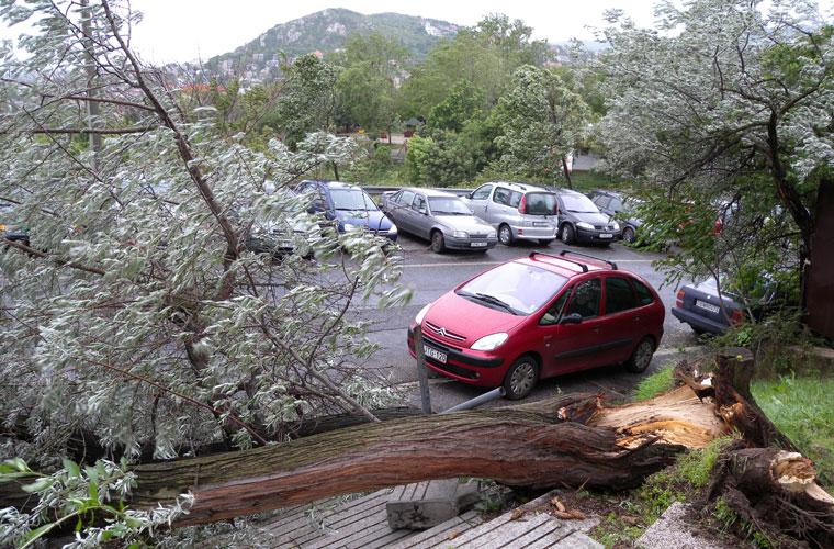 Vihar-kidöntött-fa