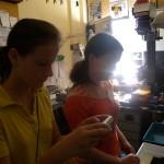 Monostori Ágota és Németh Klára Anna a laborban