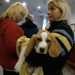 Állatkórház-várakozás-kutyával