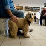 Állatkórház-várakozás-rendelésre-02