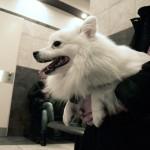 Állatkórház-várakozás-rendelésre