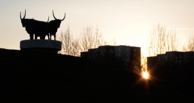 Bikák a lakótelepen
