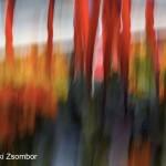 Baki-Zsombor_2458