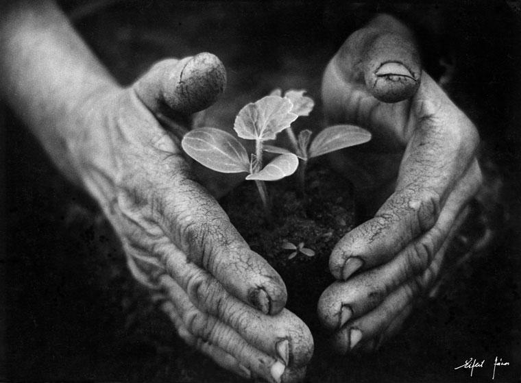 Eifert-Kertész-keze