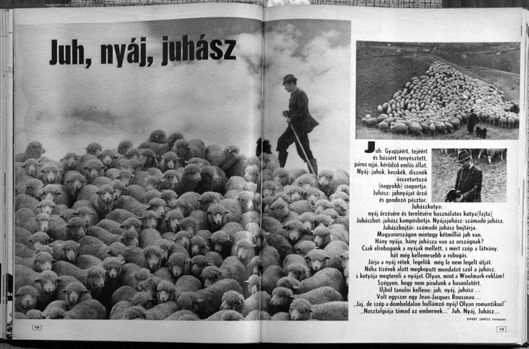 1978.08.04-Lobogó