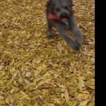 Eifert János: Beszökött-az-ősz