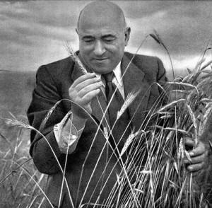 Rákosi Mátyás gabonaföldön