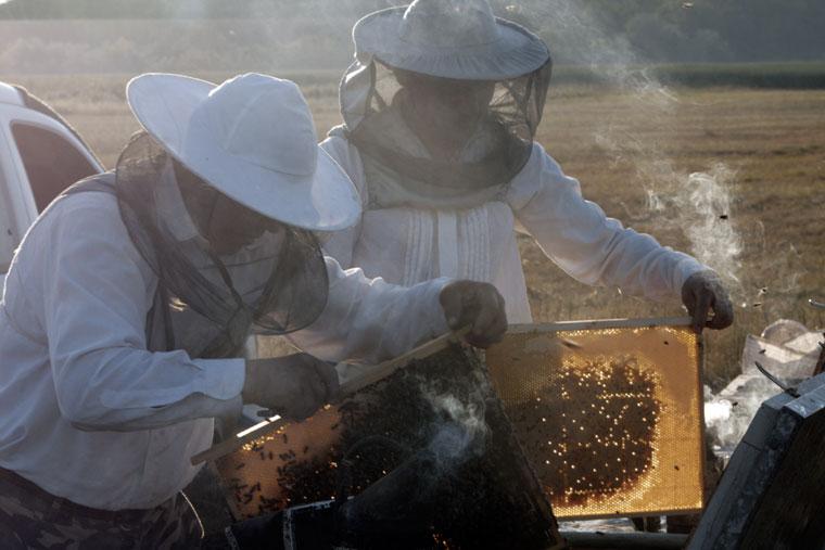 Méhészek fedeleznek, füstölővel késztetik távozásra a méheket a keretekről (Photo: Eifert János)