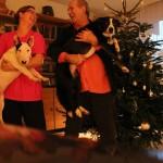 Anna és Papa kutyákkal a karácsonyfa előtt