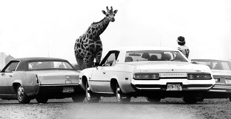 1977.07.11-Kanada-Safari-ZO (Photo: Eifert János)