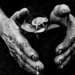 Eifert János: A kertész keze (Tarnaméra, 1978)