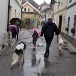 Kranj, kutyasétáltatás aTomsiceva utcában (Photo: Eifert János)