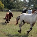 Fotósok vágtató lovak közt - Kismaros-Börzsönyliget, 2015.09.20. (Eifert János felvétele)