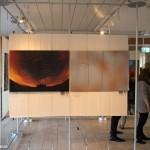 2016.03.24.-Vadvilág-kiállítás-részlete_Eifert-Jámos-felvétele