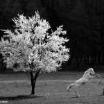 2016.03.27.-Bocska-Pap-Tina-lovát-ugratja (Eifert János felvétele)