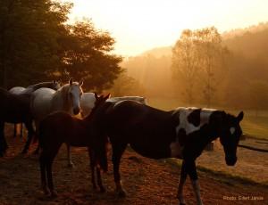 2016.09.12.-Bocska-Hajnal-a-lovastanyán (Eifert János felvétele)