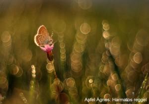 Apfel-Ágnes_Harmatos-reggel