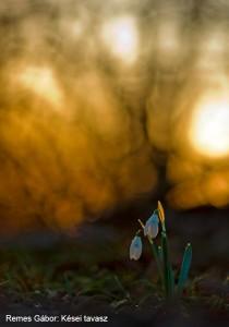 Remes-Gábor_Kései-tavasz