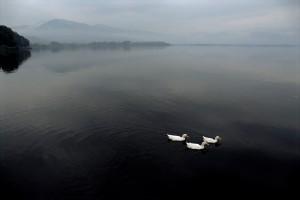 Eifert János: Három kacsa / Three ducks (Görögország, Limni Kastorias,1991)