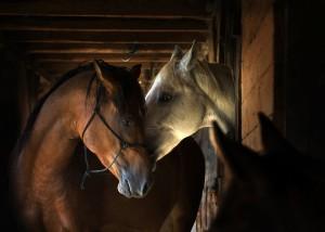 Eifert János: Horses (Bocska, 2016)