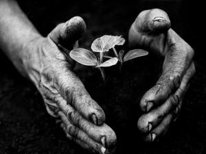 Eifert János: Kertész keze / Gardener's Hand (Tarnaméra, 1978)