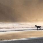 Marcel-van-Balken-Netherlands_Freehorse