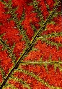 Eifert János: Őszi levél / Autumn leaf