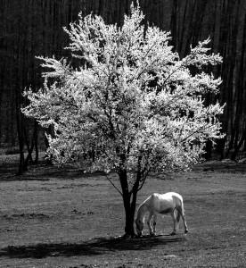 Eifert János: Tavasz / Spring (Bocska, 2016)