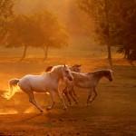 2017.08.20.-Bocska-Vágtató-lovak-02_Photo-Eifert
