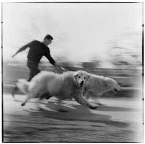 Eifert János: Vágta / Gallop (1968)