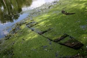 Eifert János: Holtág / Backwater (Mártély, 2004)